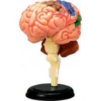 Объемная анатомическая модель Мозг человека, 4D Master (26056)