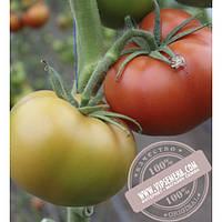 Seminis Игидо F1 (Yigido F1) семена томата индетер. красный Seminis, оригинальная упаковка (1000 семян)