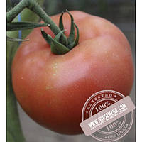 Seminis Матиас F1 (Matias F1) семена томата индетер. красный Seminis, оригинальная упаковка (500 семян)