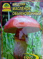 Мицелий гриба Масленок, 10г