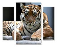 Модульная картина большой тигр