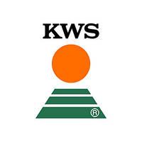 Семена кукурузы КВС (KWS)