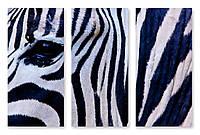 Модульная картина зебра