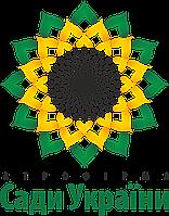 Семена подсолнечника ( Сады Украины ) НС Х 26749 Экстра