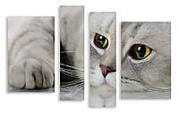 Модульная картина серый кот