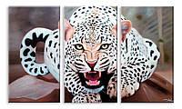 Модульная картина гепард
