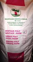 Буряк кормовий Центаур Полі 20кг (85грн/кг)