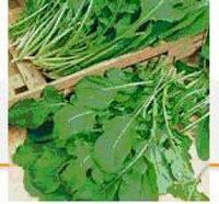 Семена салата Камиль Nasko от 10 г