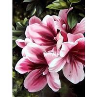 """Картина по номерам 30х40 Цветы """"Розовая лилия"""""""