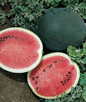 Семена арбуза Шуга бэйби 0,5 г, Satimex, фото 2