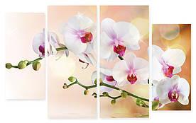 Модульна картина білі квіти