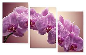 Модульна картина мокра орхідея