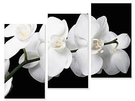 Модульна картина біла орхідея