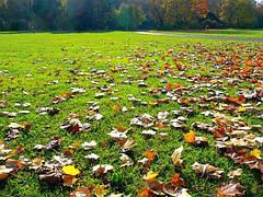 Уход за газоном: 6 шагов, которые нужно предпринять осенью