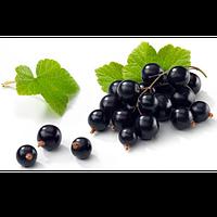 Чёрная Смородина (Black Currant)