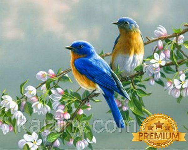 Картины по номерам 40×50 см. Babylon Premium Птички