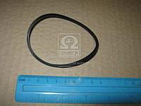 Уплотнит кольцо (пр-во Bosch) 1410206014