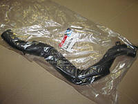 Патрубок радиатора нижний (пр-во Mobis) 254123E910