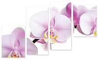 Модульная картина большая орхидея