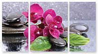Модульная картина мокрая орхидея на камнях