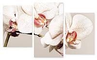 Модульная картина орхидея белая макро