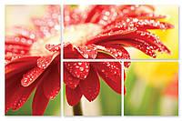 Модульная картина красный цветок в каплях