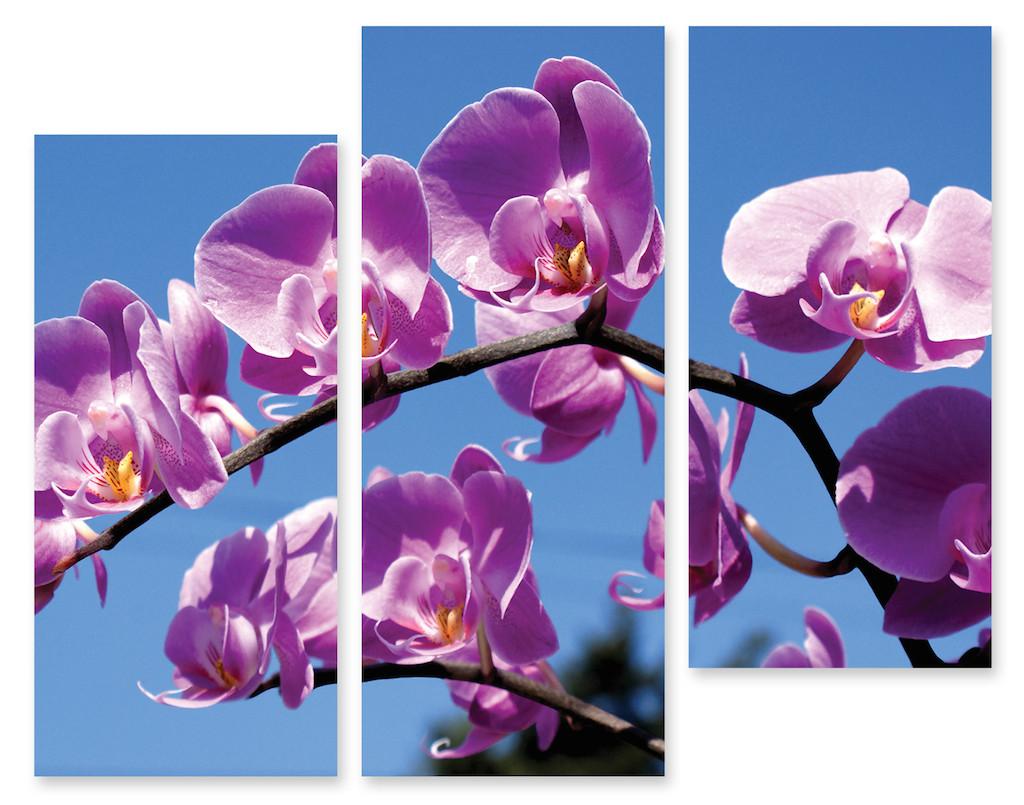 Модульная картина орхидея под солнцем