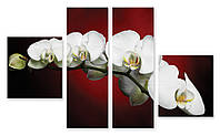 Модульная картина 3д орхидея белая