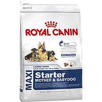 Корм Роял Канін Максі Стартер Royal Canin Maxi Starter для цуценят годуючих собак великих порід 15кг