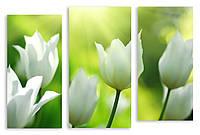 Модульная картина белые тюльпаны 3Д