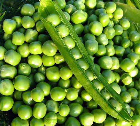 Семена гороха Болеро F1 10 г, May Seed