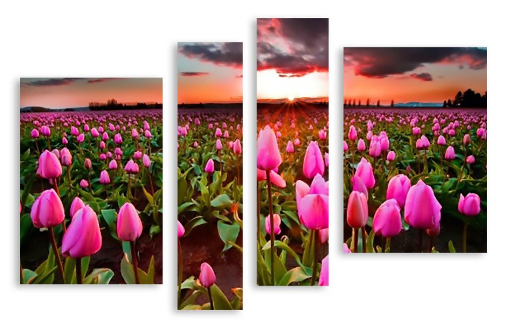 Модульная картина поле розовых тюльпанов