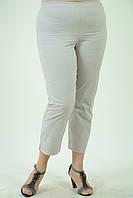 Бриджи из хлопка , Интернет магазин женской одежды, 48,50,52,54,56,58, купить бр 011-1 белый.