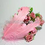Перо гусиное, с завитками, 14-17 см,  цвет розовый, фото 2