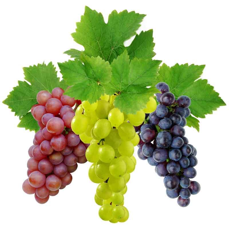 Ароматизатор Виноград Xian Taima «Grape» ароматизатор (50 мл.)