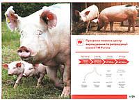 Концентрат для лактуючих свиноматок Lactis 20%