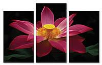 Модульная картина розово-желтый цветок 3Д