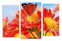 Модульная картина бабочка на оранжевых цветах