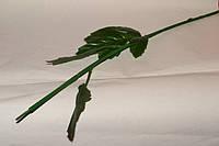 Стебель Хризантемы