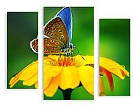 Модульная картина бабочка на цветке макро