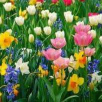 Бульби та цибулини квітів
