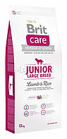 Brit Care (Брит Кеа) JUNIOR LARGE BREED Lamb & Rice - корм для щенков крупных пород 3кг