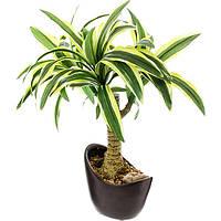 Искусственное растение Драцена 37 см N51161685