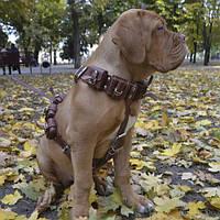 CoLLar Шлея грузовая с утяжелителями для крупных-средних собак №0 (5046)