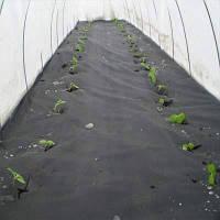 Агроволокно Виола 2135 черное 1.6x10 м