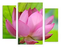 Модульная картина 3д розовый цветок макро