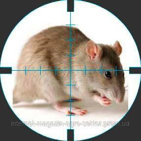 Отрава от крыс и мышей своими руками
