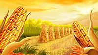 Семена кукурузы Монблан Сименс Франция