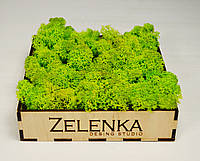 Вазон со мхом от Студии Зеленка