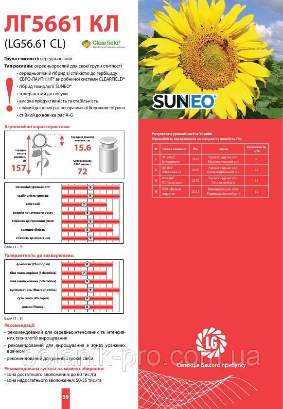 Насіння соняшнику Limagrain ЛГ 5661 КЛ (нова Тунка)